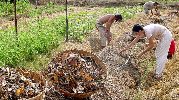 Cultivando en Auroville