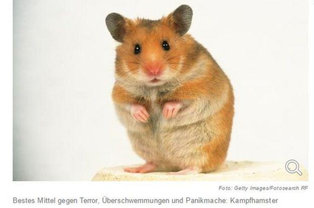 Die Welt hamster pic - screenshot