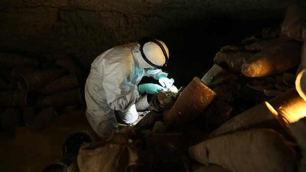 Animal mummy catacomb