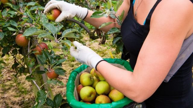 Migrant farm workers may stay after Brexit but red tape goes