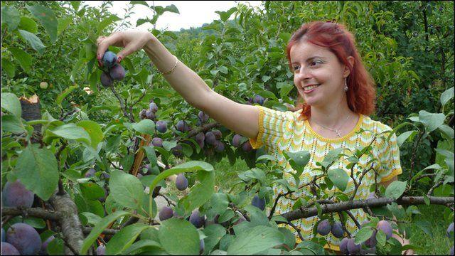 Operetta singer Amelia Antoniu picking plums in orchard