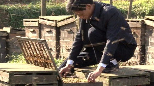 Long Xunming is a bee keeper who supplies expert information to the Nongxinton network