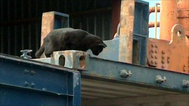 Douglas the cat on top of a container