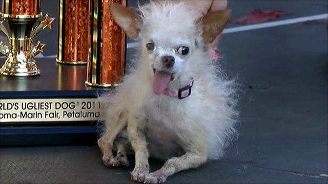 Yoda, ugly dog award winner