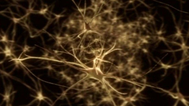 A computer-generated image of a small section of the central nervous system