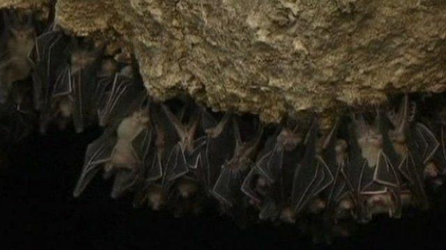 Bats at the Monfort sanctuary
