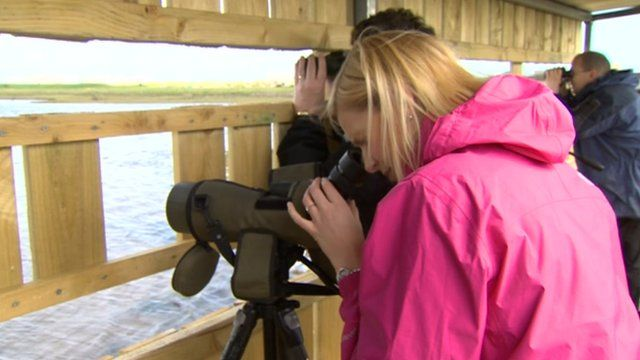 A woman looking through a telescope at the seal hide