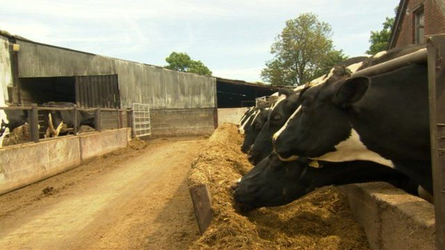 The government has said a budger cull will help combat the spread of bovine tuberculosis