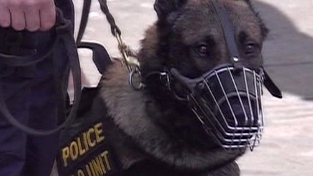 Police Dog in Greece