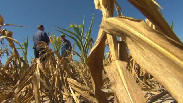 Crops affected by drought in US