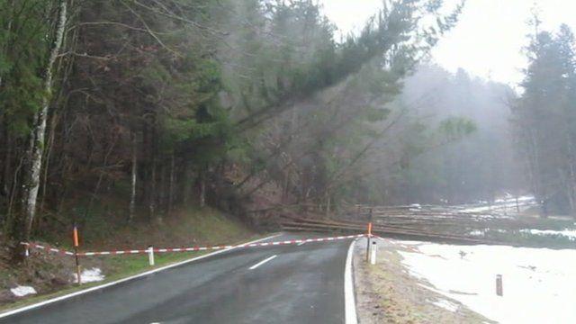Trees fall amid Austria landslide