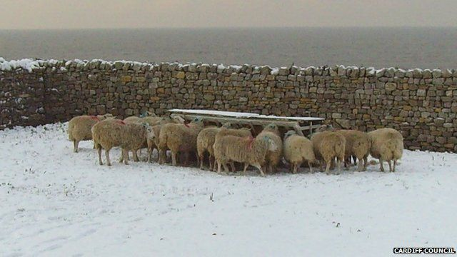 Sheep on Flat Holm - archive picture