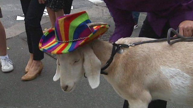 Gary the Goat