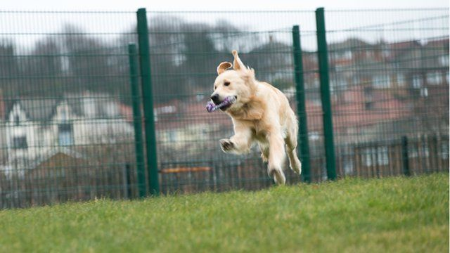 Morris the dog runs across the grass