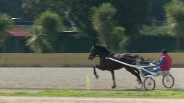 Horse and trap in the sport of trotting