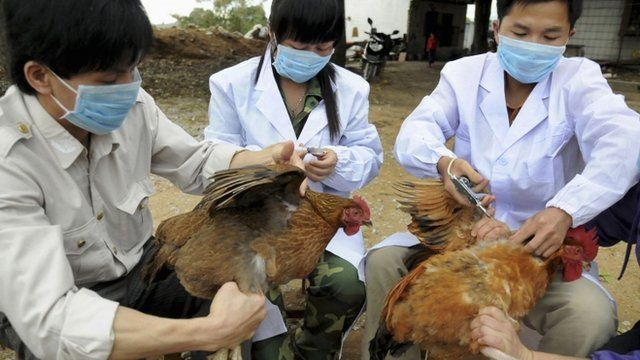 Chinese health workers inoculating chickens at a farm in Shangsi