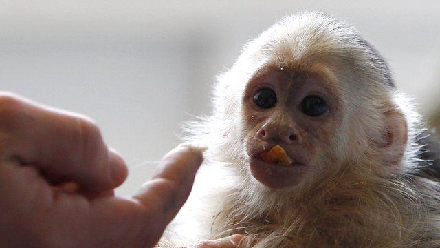 Justin's monkey Mally