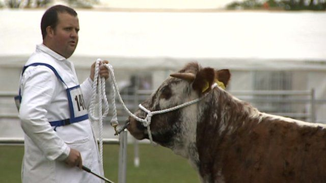 Man with cow at Royal Norfolk Show