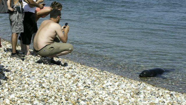 Trevor the seal