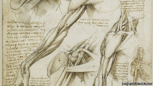 The muscles of the shoulder and arm, and the bones of the foot