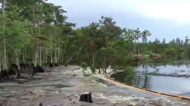 Trees swallowed by sinkhole