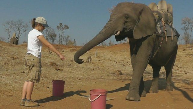 Researcher points out treat to elephant