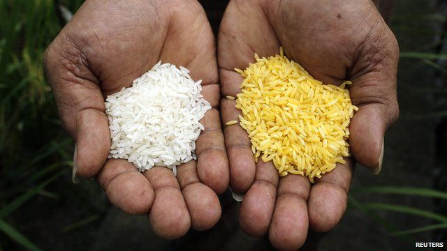 Normal rice and golden rice compared