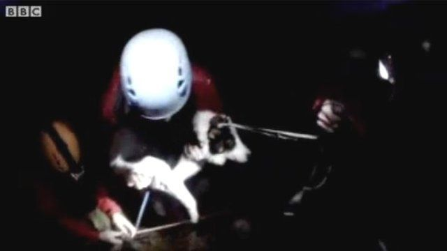 Chip with rescuers