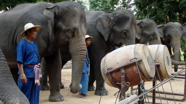 Elephants with their instruments