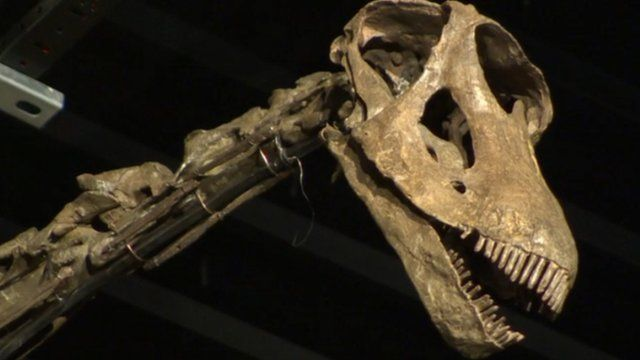 Dinosaur fossil up for sale in Sussex