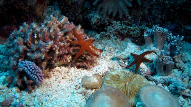 Starfish on a coral reef