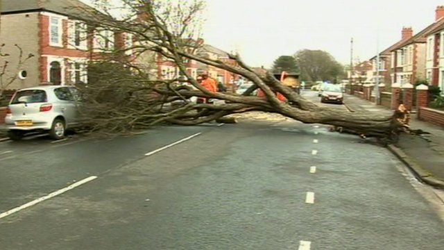 Fallen tree blocking road in Cardiff