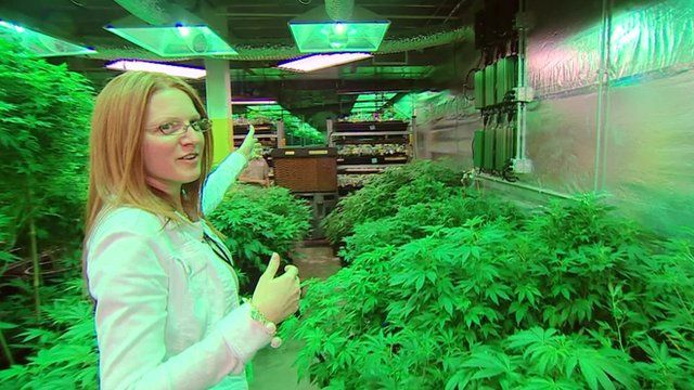 Elan Nelson in marijuana factory