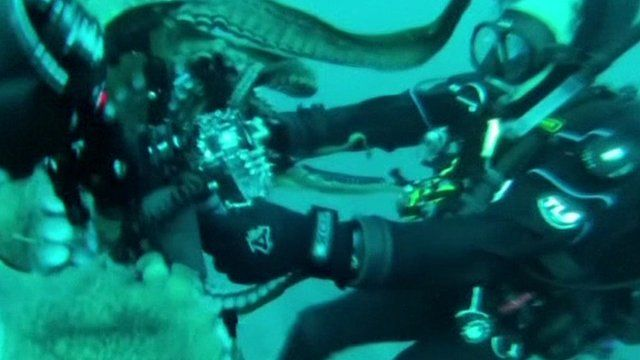 Diver wrestles with octopus