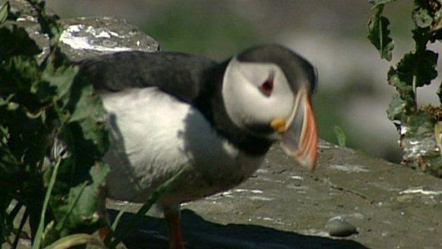 Seabird on shore