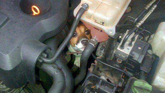 Betty Boop in car engine