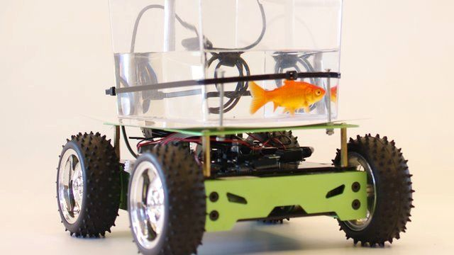 Smart tank time to take the fish for a walk bbc news for Smart fish tank