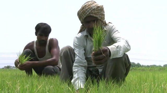 Farmers in Uttar Pradesh