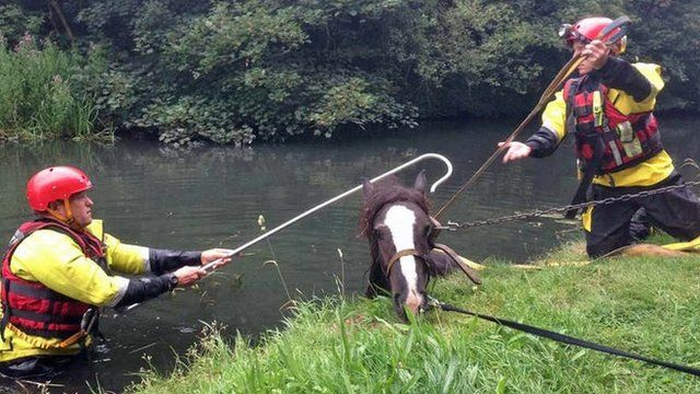 Firefighters rescue a horse