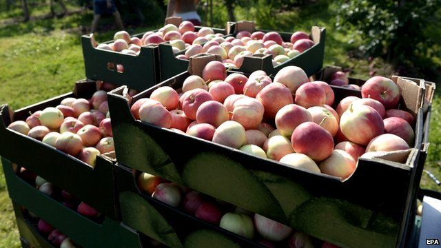 Polish apples in crates