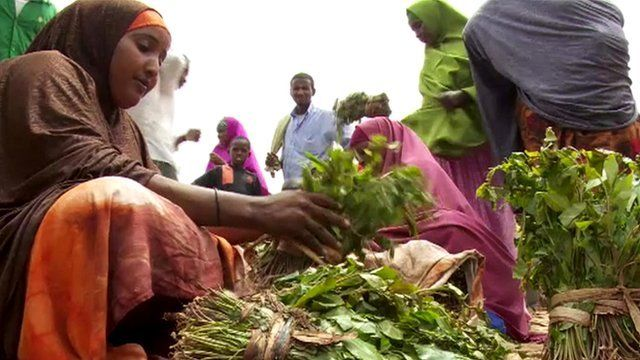 Somali woman selling Khat