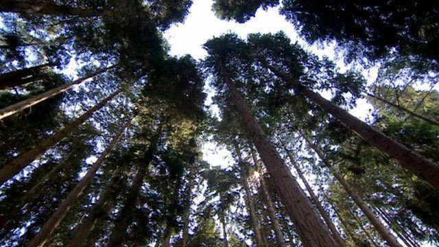 Trees at Bedgebury Pinetum