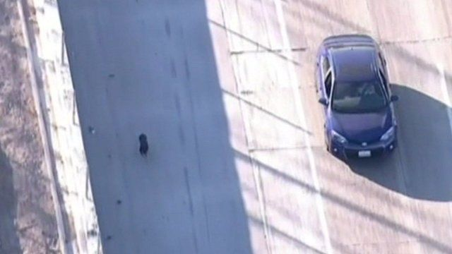 Dog on Los Angeles highway