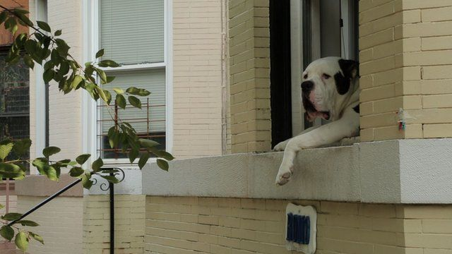 Romo in Washington DC