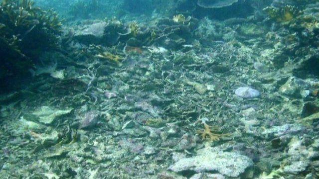 Damage caused by blast fishing