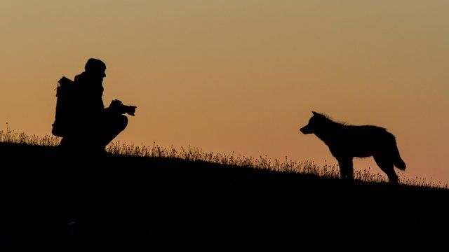 Wolf and photographer
