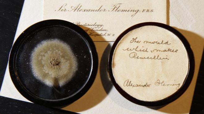 Alexander Fleming mould