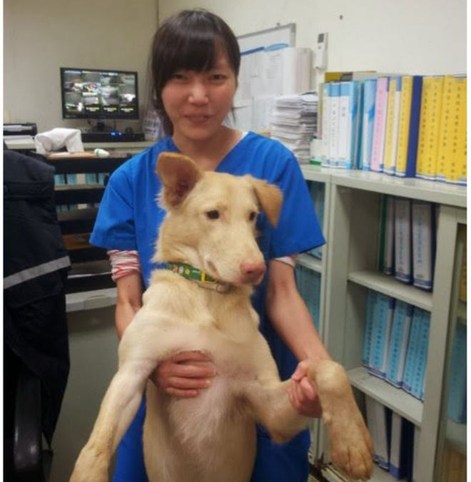Ms Chien and her dog, Egg Yolk