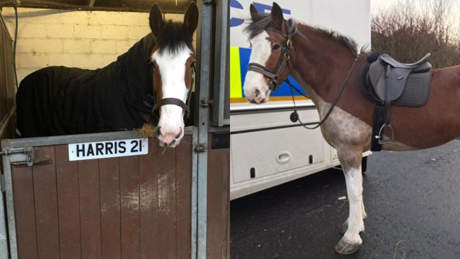 New police horses Harris and Lewis