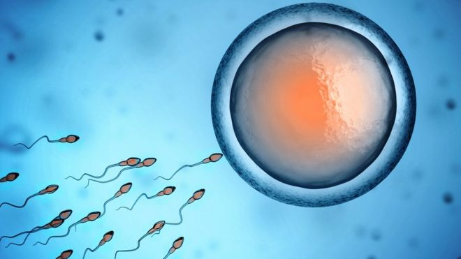 Human sperm and egg cell